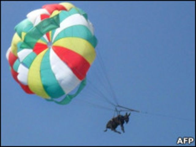 Осел на парашюте
