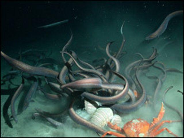 Especies de aguas profundas