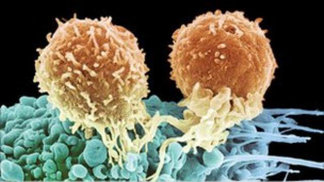 T hücreleri