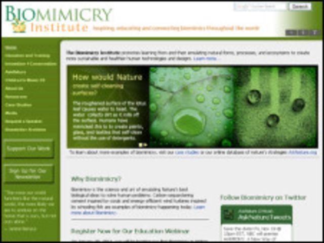 Página web del Instituto de Biomimética