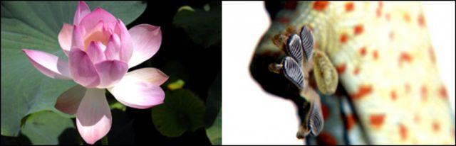 Gecko y flor de loto