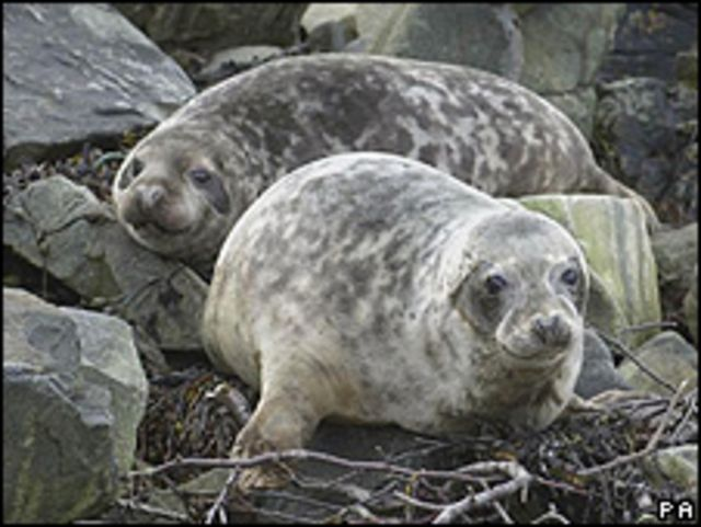Filhotes de foca (PA/Arquivo)