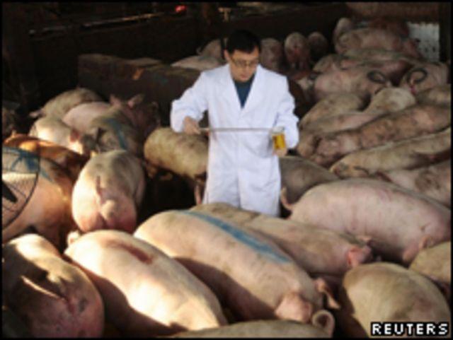 江蘇省檢疫人員嚴查來自河南省的生豬,嚴防「瘦肉精」問題豬(15/03/2011)