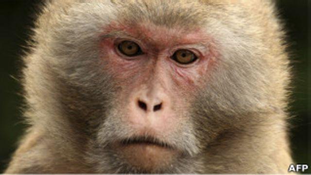 تصویر یک میمون رزئوس. تا کنون چهار دولت ایالات متحده آمریکا، روسیه (و شوروی سابق)، فرانسه و آرژانتین میمون به فضا پرتاب کرده اند