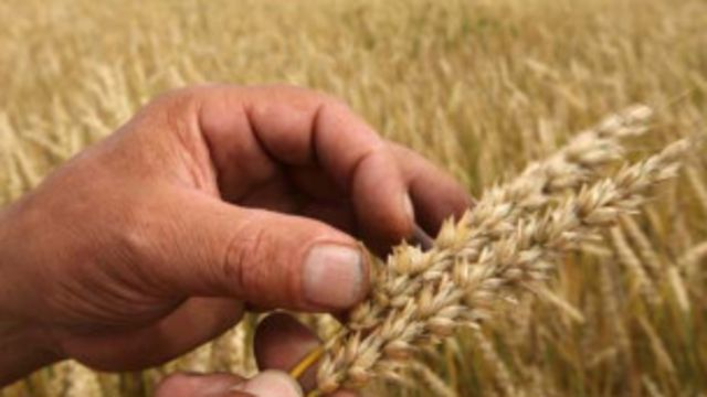 Rusia adalah salah satu eksportir utama gandum di pasar dunia