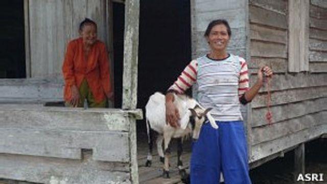 Agar tidak tergantung kepada hutan, para janda itu diberi kambing untuk memenuhi kebutuhan hidup.