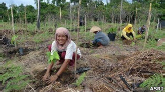 Upaya pernyadaran masyarakat agar tidak menebang hutan, membutuhkan waktu tidak sedikit.