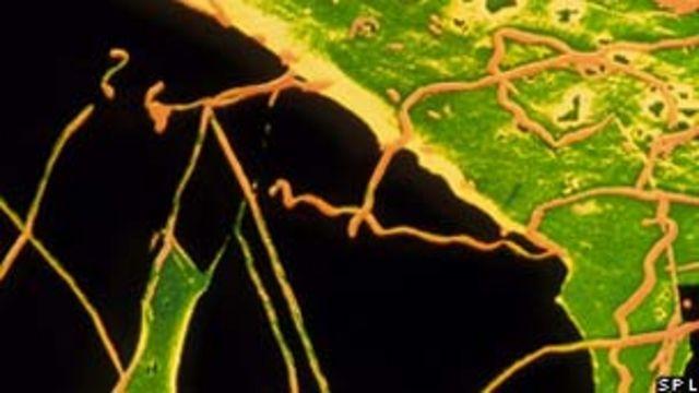 Bactéria causadora da sífilis/SPL