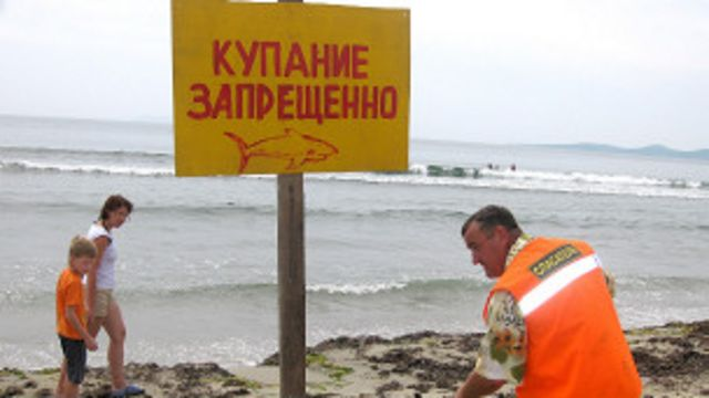 俄羅斯發生鯊魚襲人的海灘