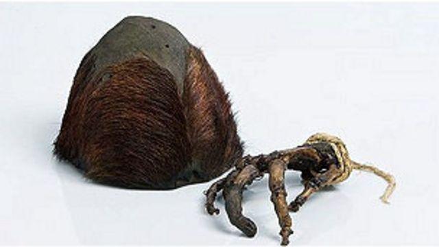 Huesos de un presunto yeti