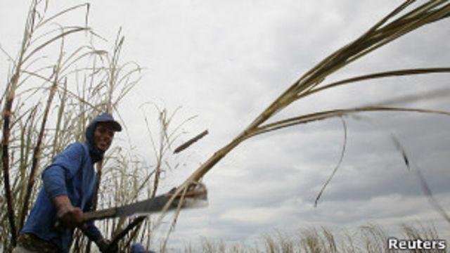 Procción azucarera en Brasil