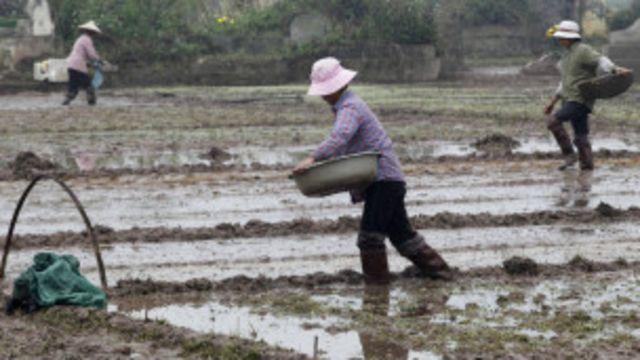 Đất đai nông nghiệp Việt Nam