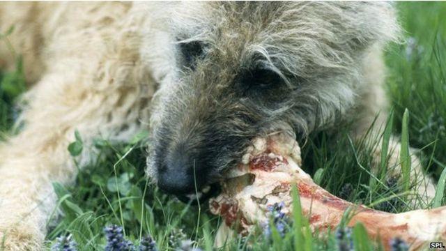 Собака, грызущая кость