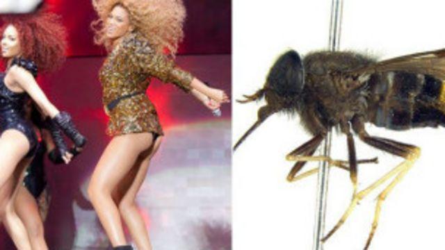 Жуки и поп-звезды