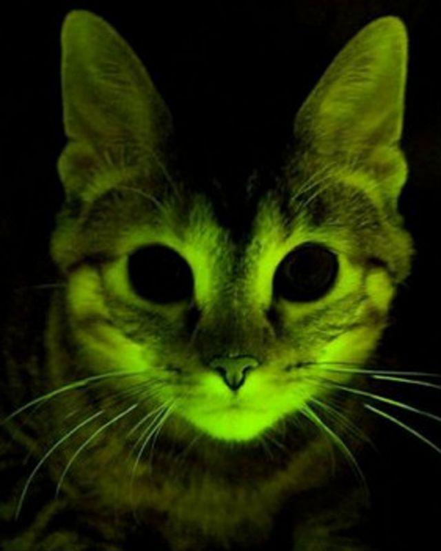 gato fluorescente