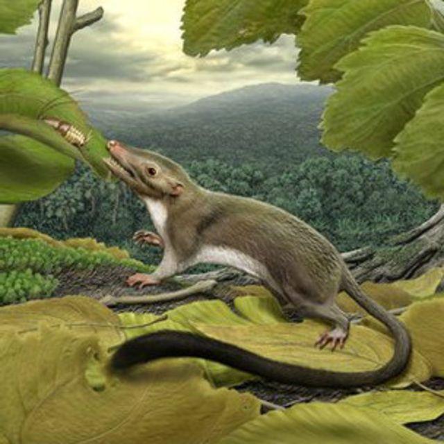 Criatura que dio origen a los mamíferos placentarios