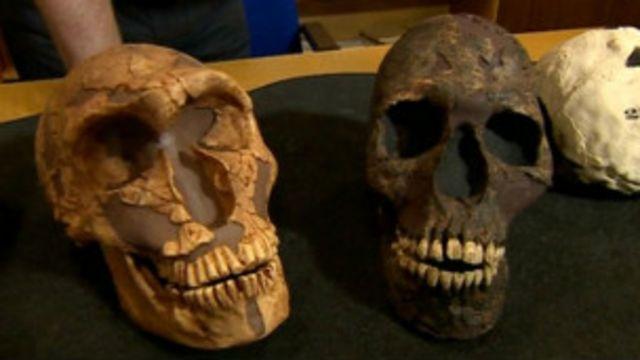 إنقراض إنسان النياندرتال