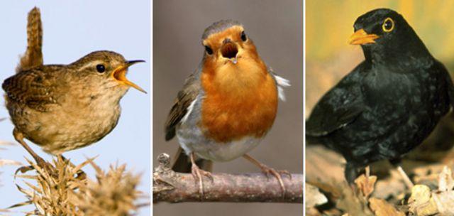 tres aves