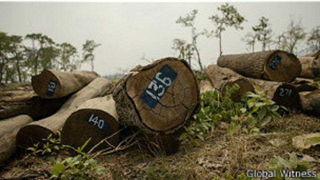 """Hoàng Anh Gia Lai bị tố cáo """"cướp đất"""" và """"phá rừng"""""""