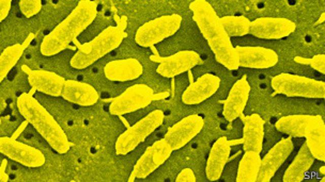 Bacteria extremófila