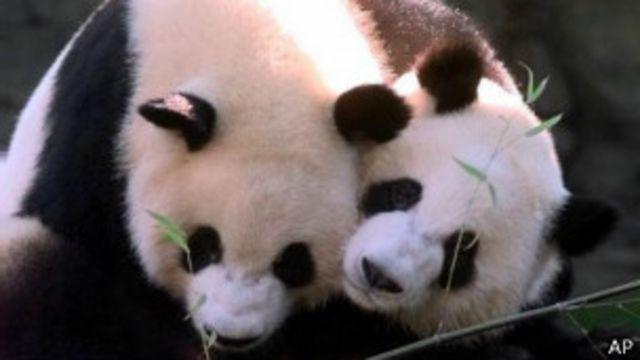 panda_atlanta