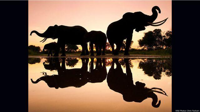 Elefantes reflejados en el agua