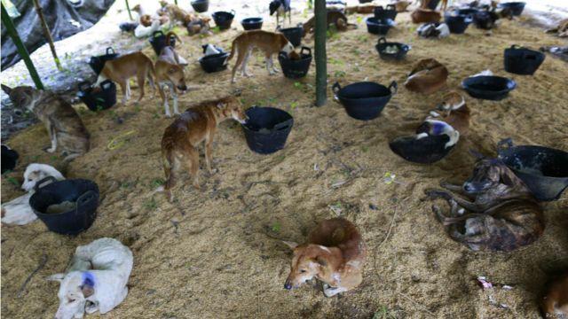 ရန်ကုန်မြို့ပြင်က ယာယီ ခွေးကယ်ဆယ်ရေး စခန်းမှာ ထားရှိတဲ့ ခွေးအကောင်၊ ၁၅၀ ကျော် လောက် ရှိပါတယ်။