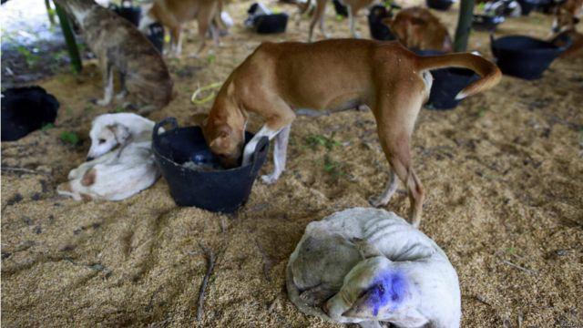 တရုတ်ကို ပို့မယ့် ခွေးတချို့နဲ့ လမ်းမတွေ ပေါ်က ခွေးလေ ခွေးလွင့် တွေကို ဖမ်းဆီး ပြီး အဲဒီ စခန်းထဲမှာ ထားရှိတာ ဖြစ်ပါတယ်။