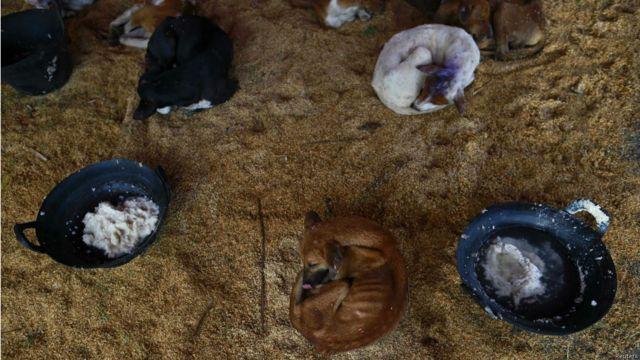 မန္တလေးမြို့မှာတော့ ခွေးတွေကို ဖမ်းပြီး တရုတ် နိုင်ငံ တင်ပို့တဲ့ စျေးကွက်လည်း ရှိနေပါပြီ။