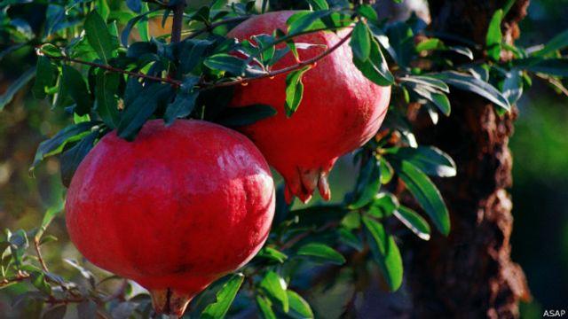 افغانستان هر کال د شاوخوا ۲۰۰ میلونو ډالرو په ارزښت میوه صادروي