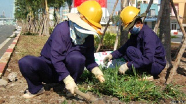Công nhân Công ty Công viên Cây xanh