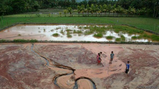 Campos de arroz contaminados