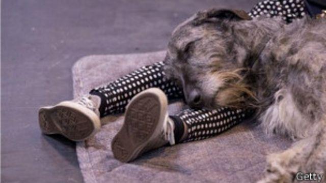 Perro dormido sobre las piernas de un hombre