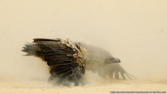 2013世界野生動物攝影獎揭曉