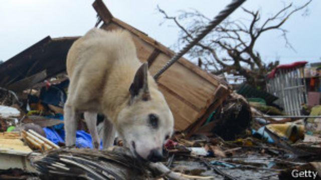Perro en Filipinas