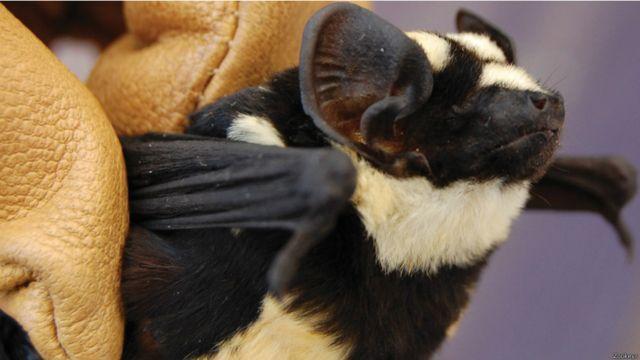 Galeria preparada pela BBC mostra criaturas descobertas por cientistas no mundo todo, incluindo Brasil