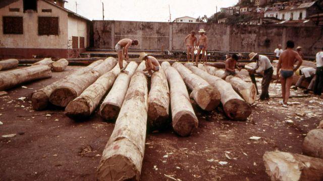 Hombres cortando troncos. Cortesía de Mike Fitzgibbons