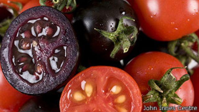 Tomates morados