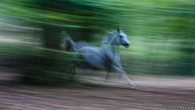 Kuda sedang berlari di Lecco, Italia