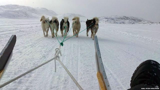 Anjing-anjing kutub di tengah hamparan salju
