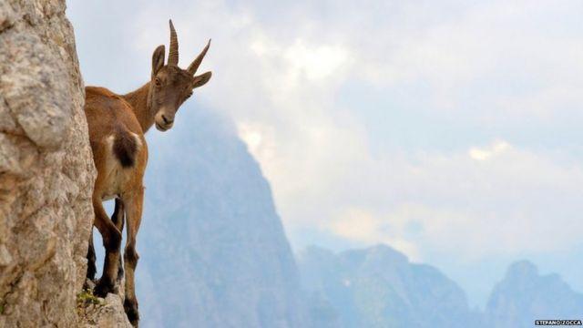 Rusa di Pegunungan Alpen