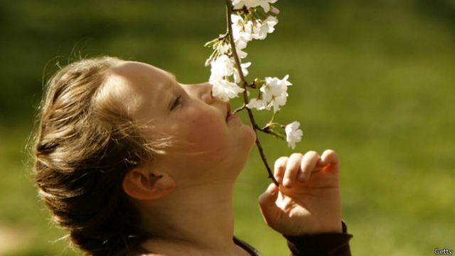 O cheiro doce de uma flor é resultado de uma combinação de diversos odores