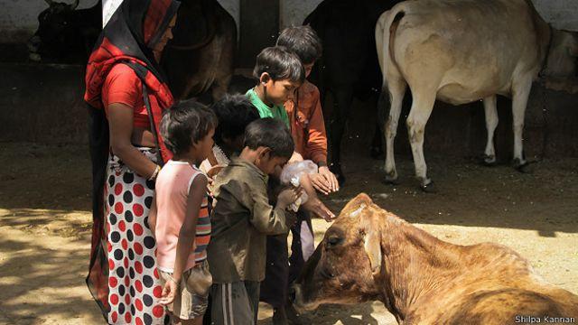 ভারতে হিন্দুরা গরুকে দেবতা হিসাবে দেখে