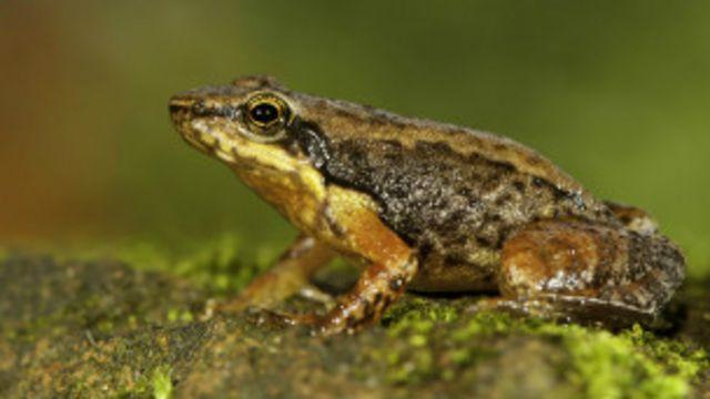 dancing_frog_2