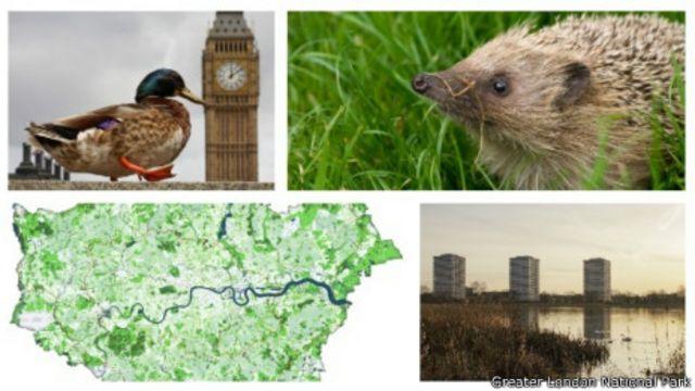 Campaña Londres Parque Nacional