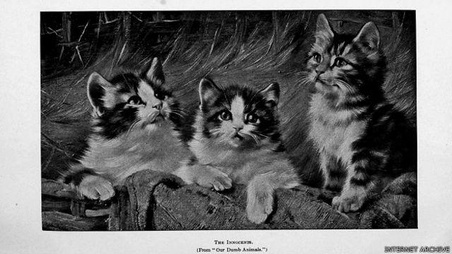 Результатом амбициозного проекта стало многократное увеличение числа котиков в интернете