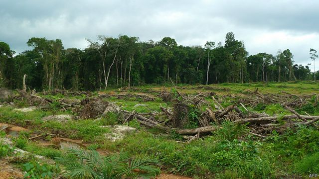 Floresta na Libéria (AFP)