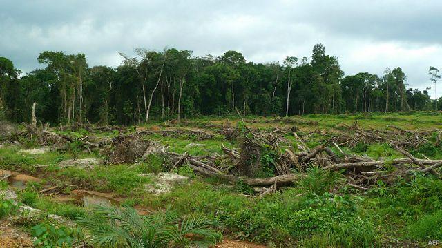 En 2012, la Présidente Ellen Johnson Sirleaf avait suscité de nombreuses critiques au niveau international en autorisant des entreprises à réduire de 58 % la forêt tropicale du pays. Après nombre de protestations, ces permis ont été retirés.