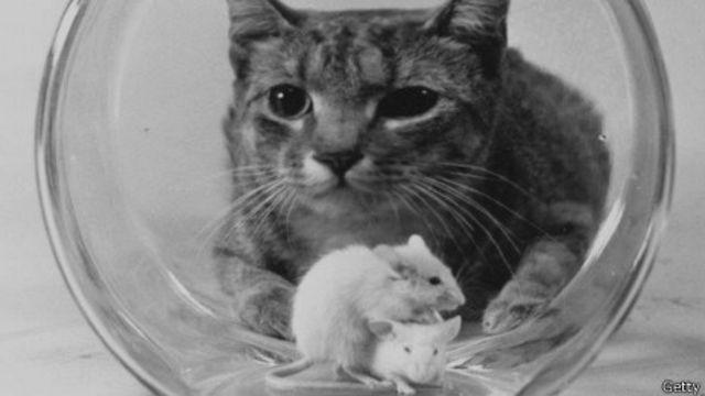 'Đánh con chuột đừng để vỡ bình...tức là phải giữ cho được cái ổn định'