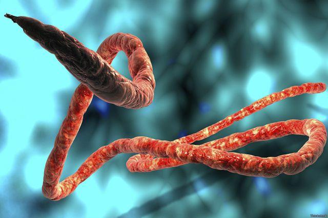 Mnyoo wa Ebola
